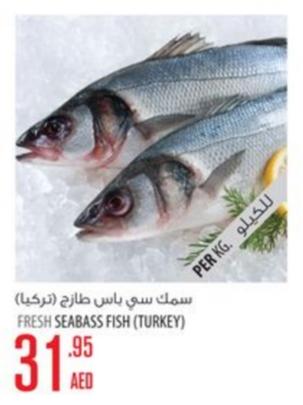 Fresh Seabass Fish (Turkey)