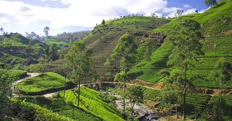 ✈ National Day Getaway: Sri Lanka with Tours and Flights
