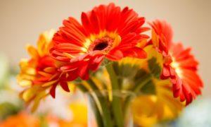 AED 100 Toward Flower Arrangement