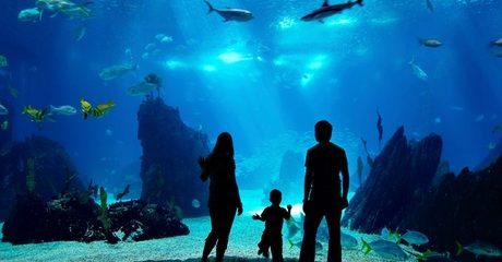 Dubai Mall Underwater Zoo Entry