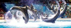 dubai_dolphins-hsbc-discount-sales-ae