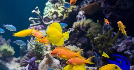Aquarium Maintenance Service