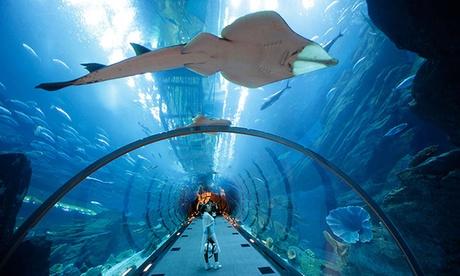 Dubai Mall Aquarium Tour
