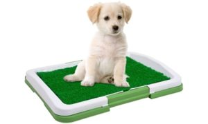 Indoor Puppy Trainer Pad