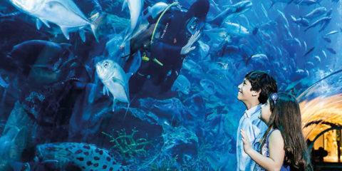 Experience Underwater Adventures