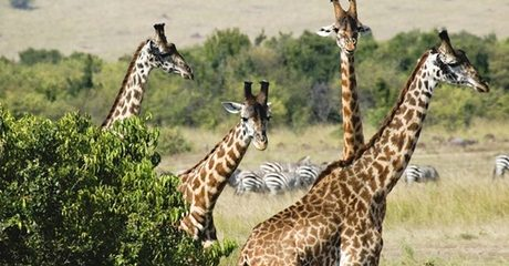 ✈ 3-Night Kenya Safari Tour with Flights