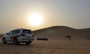 Desert Safari with Falcon