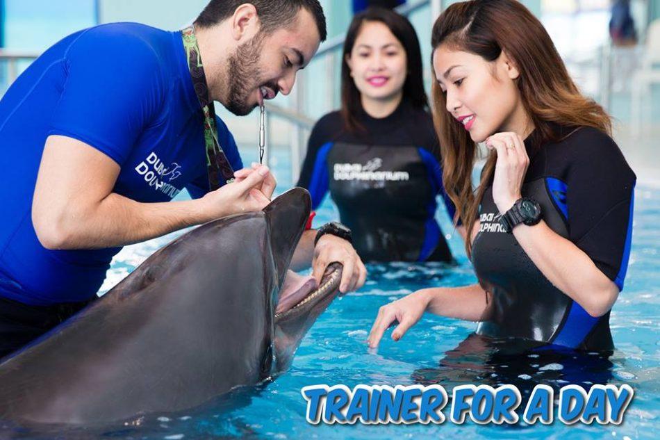 Dubai Dolphinarium Trainer for a Day Program