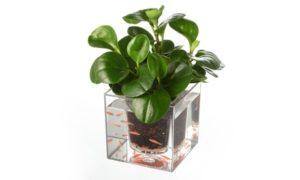 Plastic Plant Pot with Fish Tank