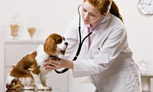 Annual Vaccination for Cat or Dog