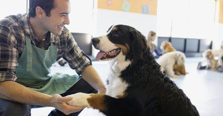 Pet Care Business Online Course