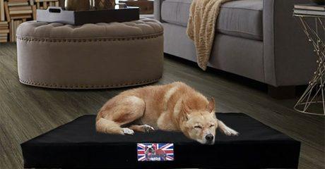 Bulldog Orthopaedic Pet Beds