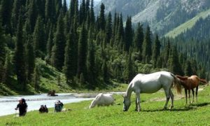 ✈ Kyrgyzstan: National Day 3-Night 4* Stay with Flights