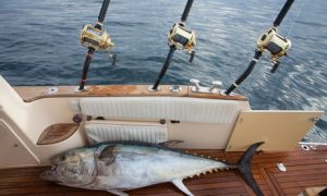 Private Fishing Trip for Up to Six