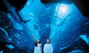 Dubai Aquarium Tickets for Two
