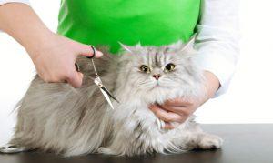 Pet Grooming Package