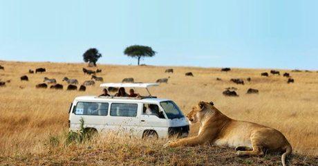 ✈ Kenya: 3-Night Safari Experience with Flights