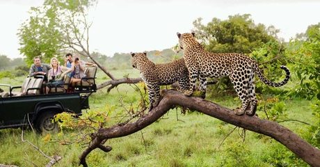 ✈ South Africa: 4-Night Tour with Flights