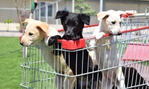 Food for Sheltered Animal