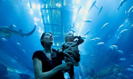 Dubai Aquarium and Global Village