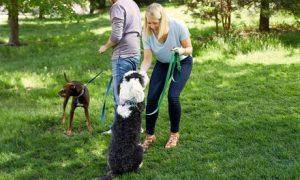 Pet Sitting Online Course