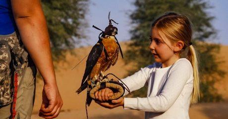 Falconry Safari Experience: Child AED 425