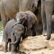 Sri Lanka: 4-Night Tour with Meals