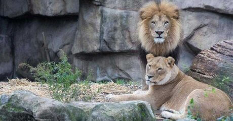 Abu Dhabi: 1-Night Ramadan Stay with Zoo Tickets