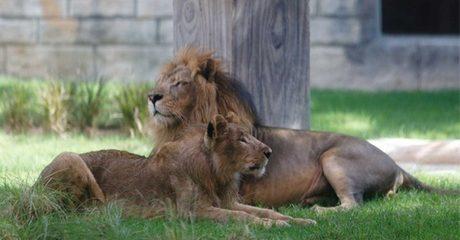 Abu Dhabi: Ramadan Stay with Zoo Tickets