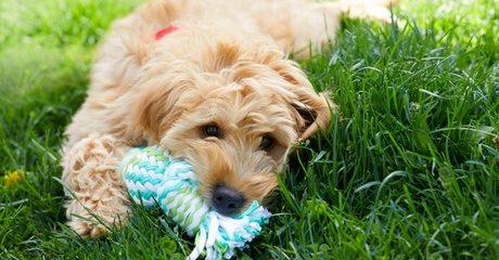 Basic Pet Grooming