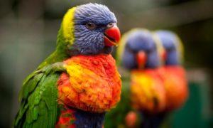 Bird Exam and Nail Trim