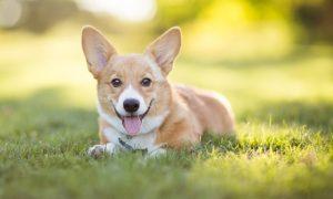 Dog Behaviour and Training Course