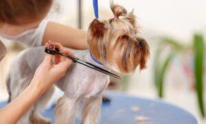 Full Pet Grooming Package