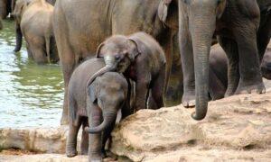 Sri Lanka: 4-Night Tour with Meals
