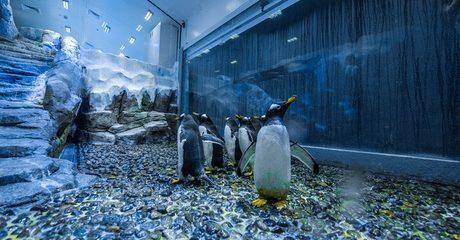 Dubai Aquarium and Penguin Cove