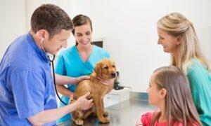 Choice of Pet Check-Up