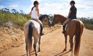 Beginner Horse Riding Lesson