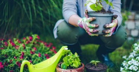 Gardening Online Training Course
