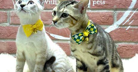Cat Daycare Service