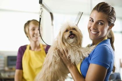 51% Off on Pet - Grooming / Salon at VIP PETS Grooming Salon