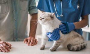 Animal Behaviour/Cat Care Online Course