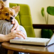 Animal First Aid Online Course